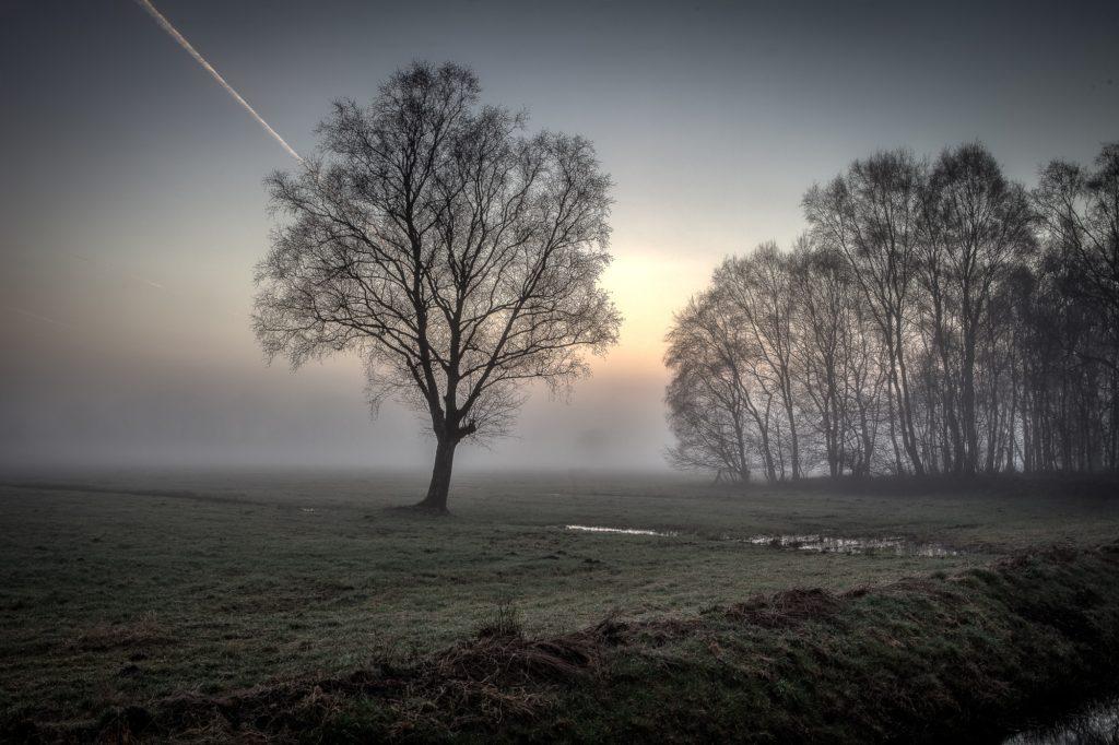 Rehdener Geestmoor